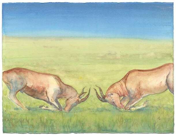 """Confrontation,"" one a several works in an exhibit of watercolor paintings by Greenwich artists Shelly Malkin, on view at the Kiernan Nature Gallery of the Audubon Greenwich. Photo: Contributed Photo / Stamford Advocate Contributed"