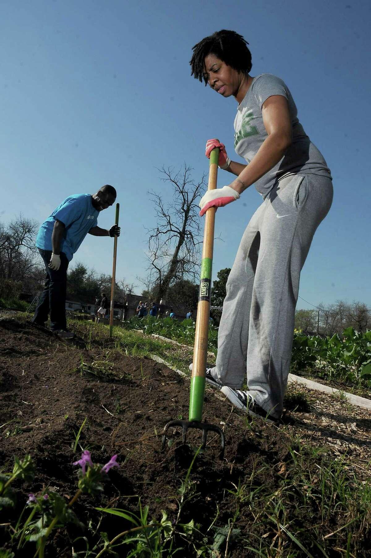 Volunteer Kristen McPherson works at the Kashmere Community Garden on Cavalcade.