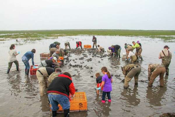 Wildlife scientists and volunteers scramble to remove, sort and transport some of the more than 300 ducks and coots captured under a rocket-propelled net at Anahuac national Wildlife Refuge this past week.