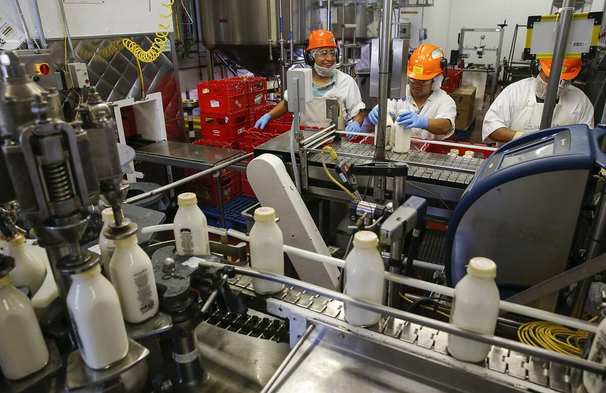 Alberto Figueroa, Eduardo Lopez and Antonio Rodriguez, work the organic non-GMO Half & Half production line at the processing plant of the Straus Family Creamery in Marshall, California, on Thurs. March 24, 2016.