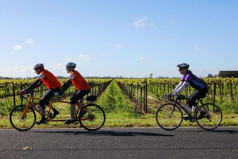 Cyclists Andy Grutman and Anita Herman ride in tandem as Ann-Marie Koth rides behind past one of Lodi's famed vineyards. Photo: Gabrielle Lurie, Special To The Chronicle
