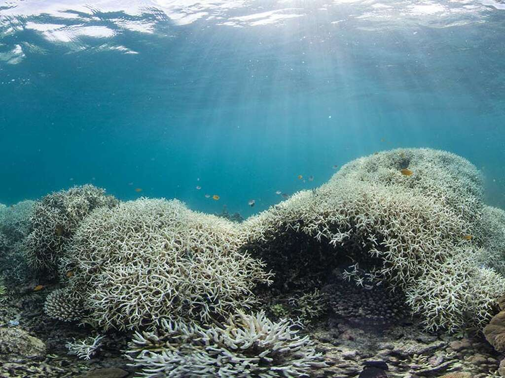 stunning photos show the great barrier reef is dying due to