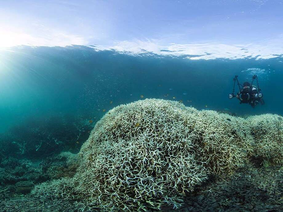 Coral bleaching at Lizard Island, Great Barrier Reef. Photo: WWF AUSTRALIA/XL CATLIN SEAVIEW SURVEY