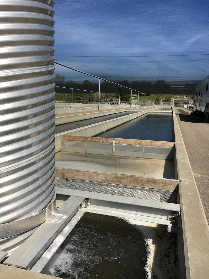 """One of the """"raceway"""" tanks for baby salmon at the Mokelumne River Fish Hatchery in San Joaquin County. Photo: Spud Hilton, The Chronicle"""