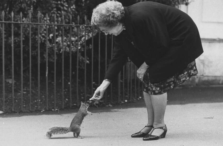 Children's author Beverly Cleary feeding squirrel in Kensington Gardens. (Photo by Terry Smith/The LIFE Images Collection/Getty Images)