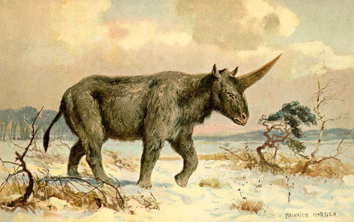 A rendering of a Siberian unicorn.
