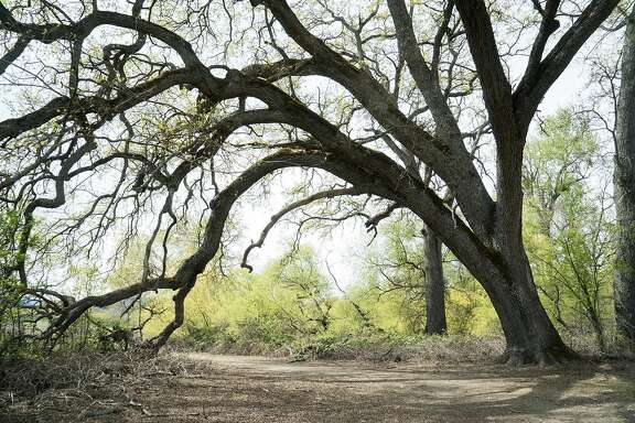 The Cache Creek Nature Trail is seen at Anderson Marsh State Park in Lower Lake, Calif. on Sunday, March 27, 2016. The park celebrates three types of history: natural, Native and European.