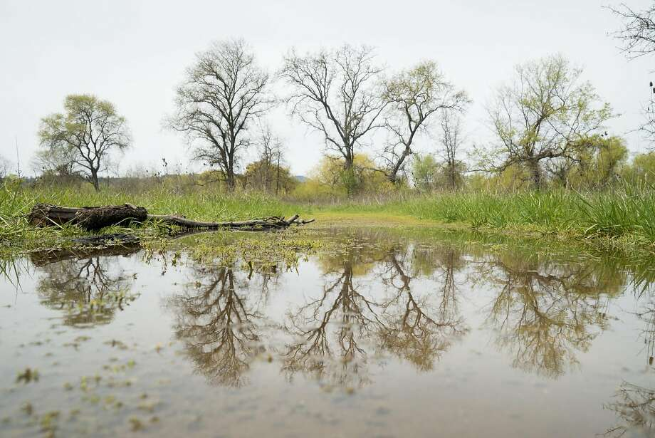 Trees are reflected at the Anderson Marsh State Park in Lower Lake. Photo: James Tensuan / Special To The Chronicle 2016