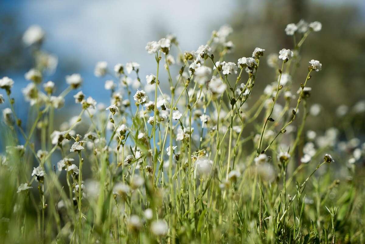 Wildflowers bloom all around the Highlands Spring Reservoir.