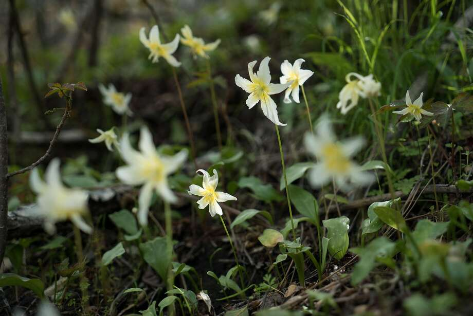 Wildflowers bloom all around the Highlands Spring Reservoir. Photo: James Tensuan, Special To The Chronicle