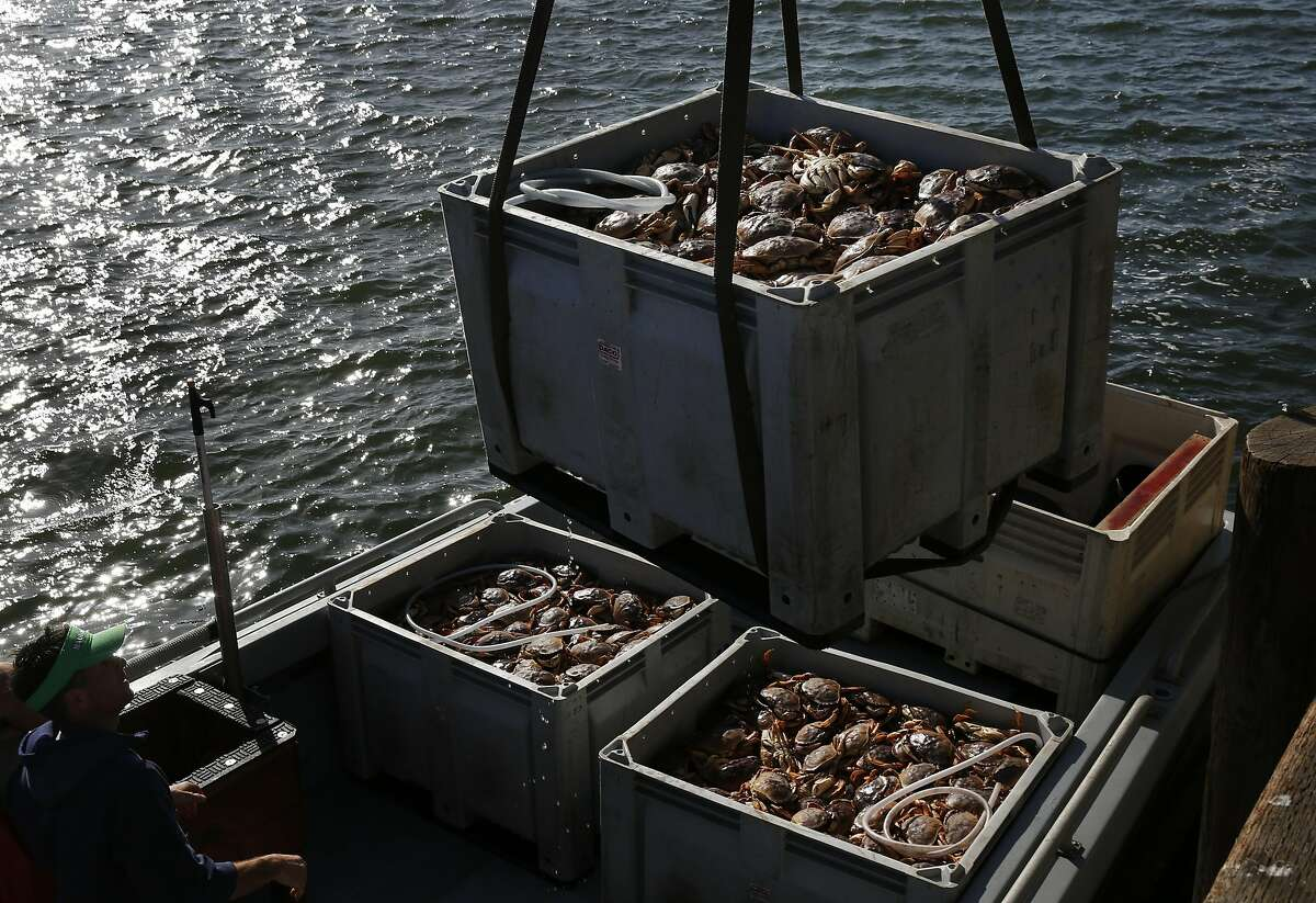 Captain Savior Papetti of BITE ME offloads crates of crab at Pier 45 March 30, 2016 in San Francisco, Calif.