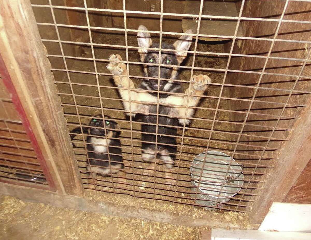 Stephens County investigators along with the Humane Society of North Texas rescued 73 dogs from an alleged puppy mill on March 18, 2016.