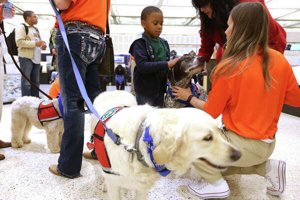 Jason Kelley, 5, of Richmond, Texas pets therapy dog Truman, at the Bush Intercontinential Airport  on Thursday, March 31, 2016, in Houston.