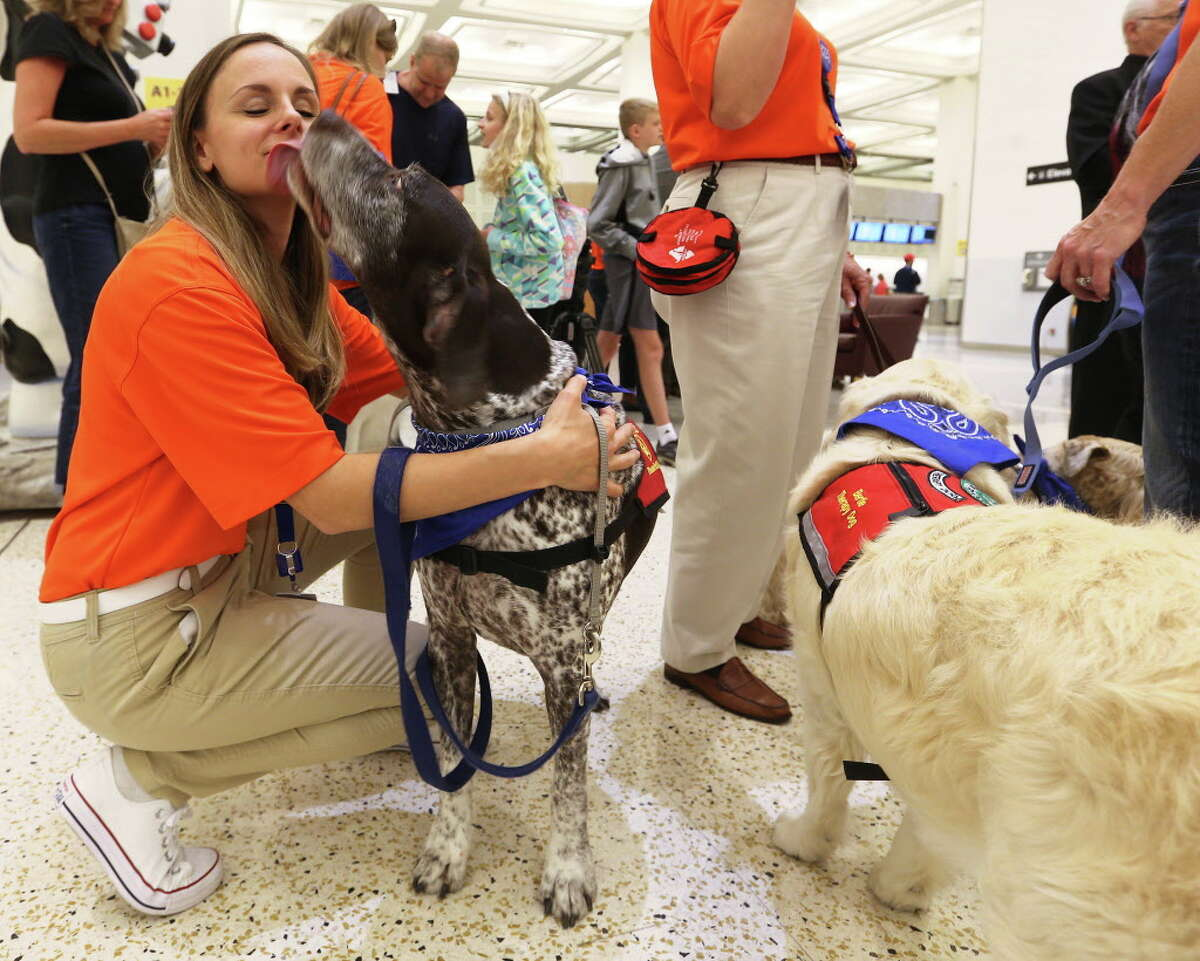 Jill Matte of Spring, Texas gets a kiss from her therapy dog, Truman, at Bush Intercontinental Airport on Thursday, March 31, 2016, in Houston. The dogs were added by the Houston Airport System to help make air travel more fun