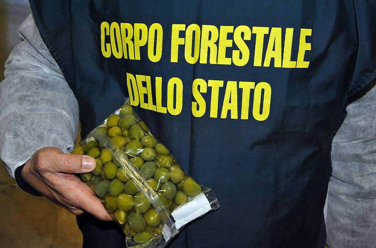 Italian officers found more than 85 tons of olives that had been