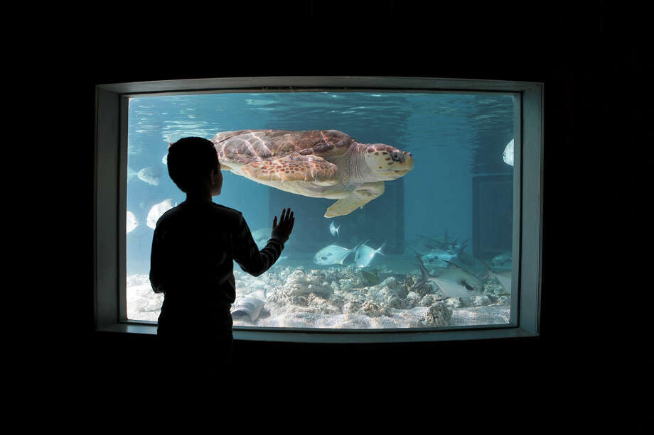 """The Maritime Aquarium at Norwalk is presenting three """"Sensory Friendly Mornings"""" to give guests with special needs a fun, comfortable and accepting place to visit, Saturday, April 2 through Monday, April 4. Photo: Megan Maloy / Contributed Photo"""