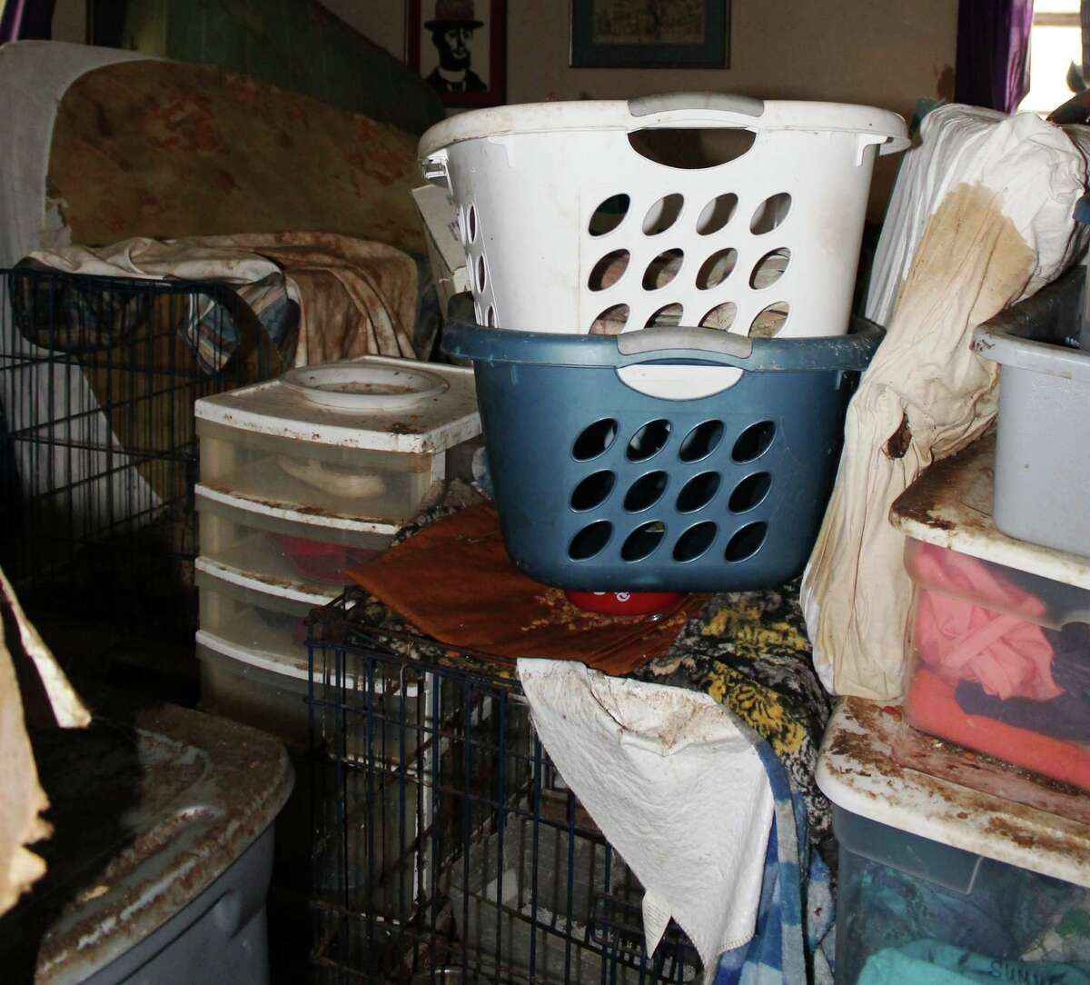 Animal Care Services seized 29 cats from a home on West Summit Aveune on March 29.