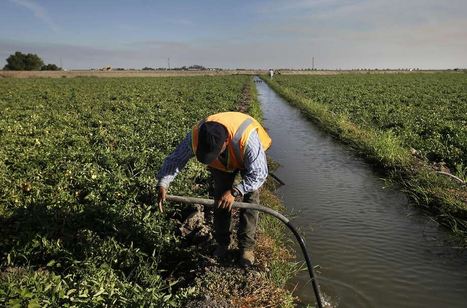 Emilio Alcantar uses suction to pull water into a tube as part an irrigation process for tomatoes on a Los Banos farm in 2014. Photo: Leah Millis, The Chronicle