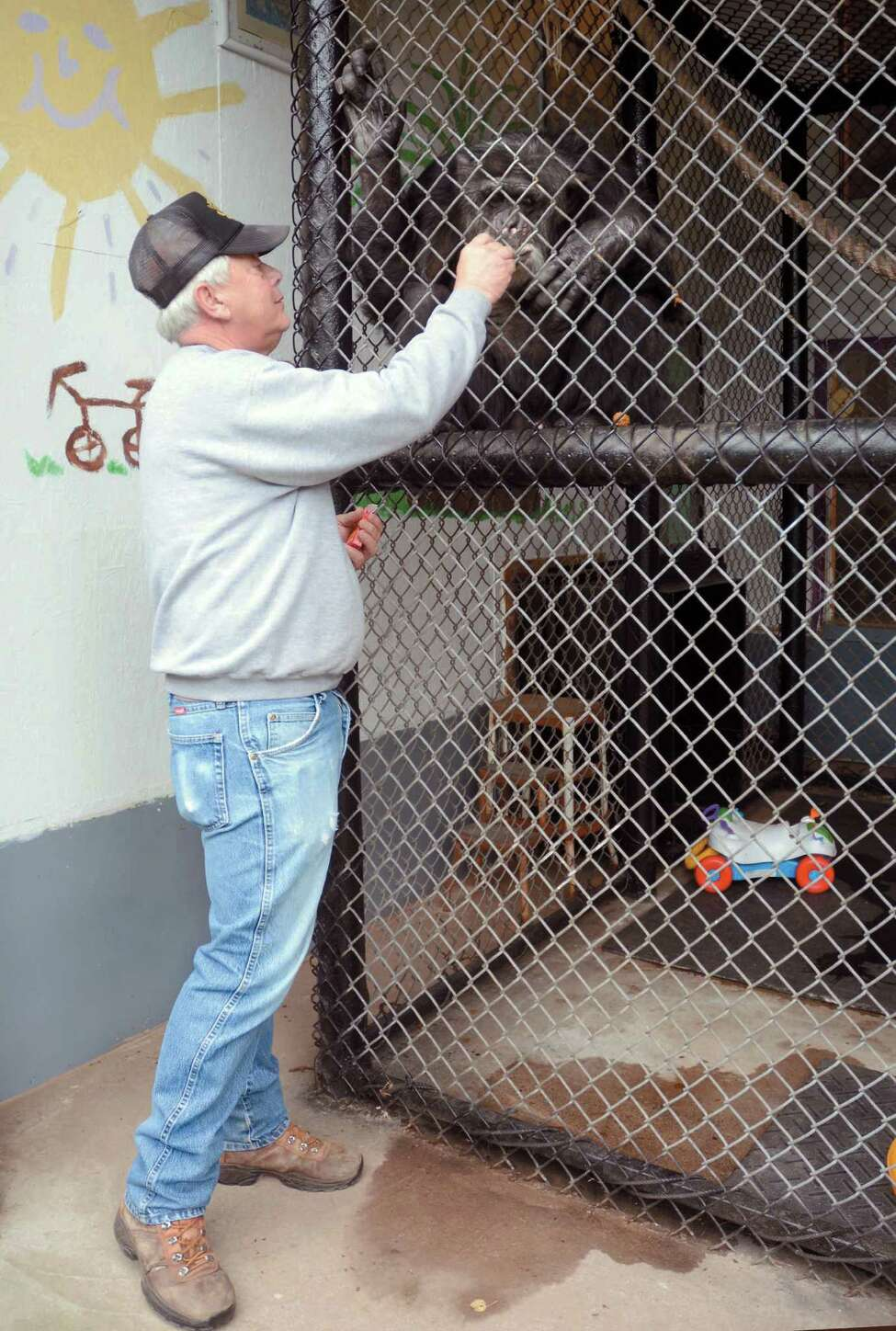 Patrick Lavery, owner, interacts with Tommy a chimpanzee on Oct. 29, 2014 in Gloversville, N.Y. A chimpanzee is not entitled to the rights of a human and does not have to be freed by its owner, a New York appeals court ruled Thursday, Dec. 4, 2014. The three-judge Appellate Division panel was unanimous in denying