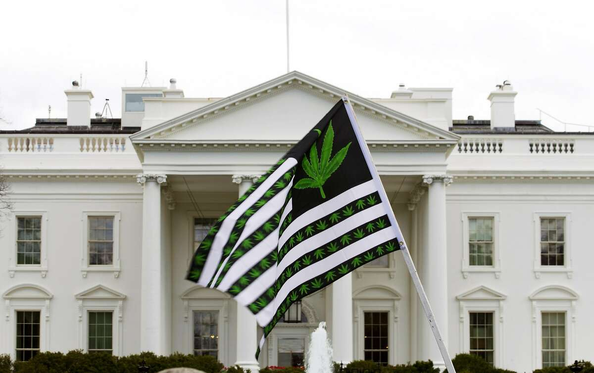 A demonstrator waves a flag with marijuana leaves on it during a protest calling for the legalization of marijuana outside of the White House, in Washington, Saturday, April 2, 2016. During the rally protesters demanded President Obama use his authority to stop marijuana arrests and pardon offenders. ( AP Photo/Jose Luis Magana)