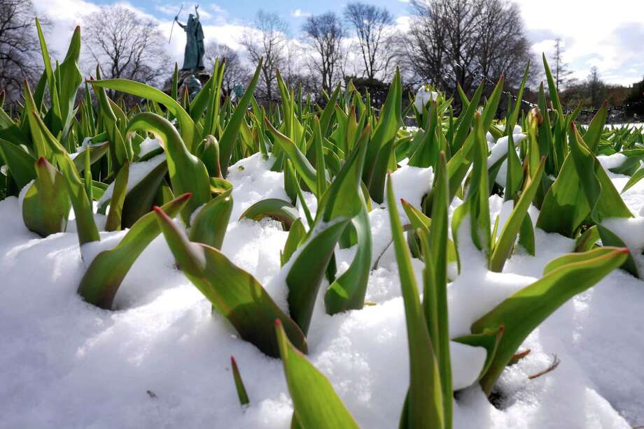 Snow covers the ground in Washington Park on Sunday, April 3, 2016, in Albany, N.Y.   (Paul Buckowski / Times Union)