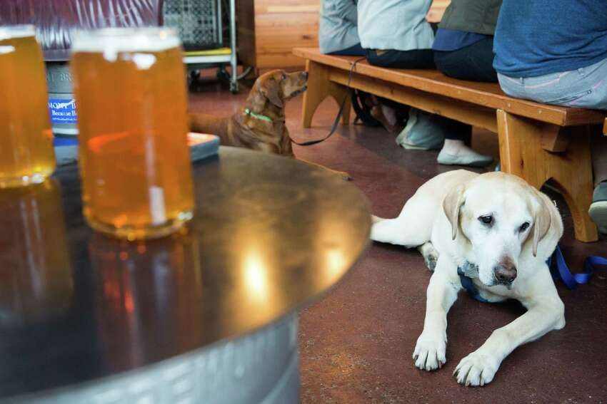 Murphy, front, and his girlfriend, Nora, keep their people company at Fremont Brewing.