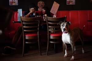 Norm's Eatery and Ale House , Fremont: Sasha, a pit bull mix, sits quietly as Lizette Lopez and Shawn Vines pick from the menu.