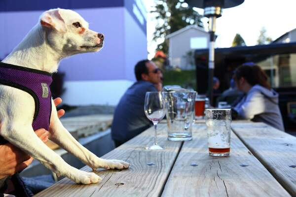 Poppy enjoys the late afternoon sunshine at Hellbent Brewery in Lake City, Mar. 30, 2016.