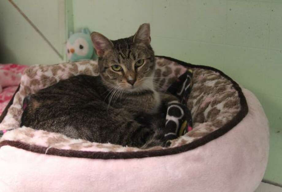Edmond is a young, playful boy with a fun-loving personality. (Mary Lou Baker)