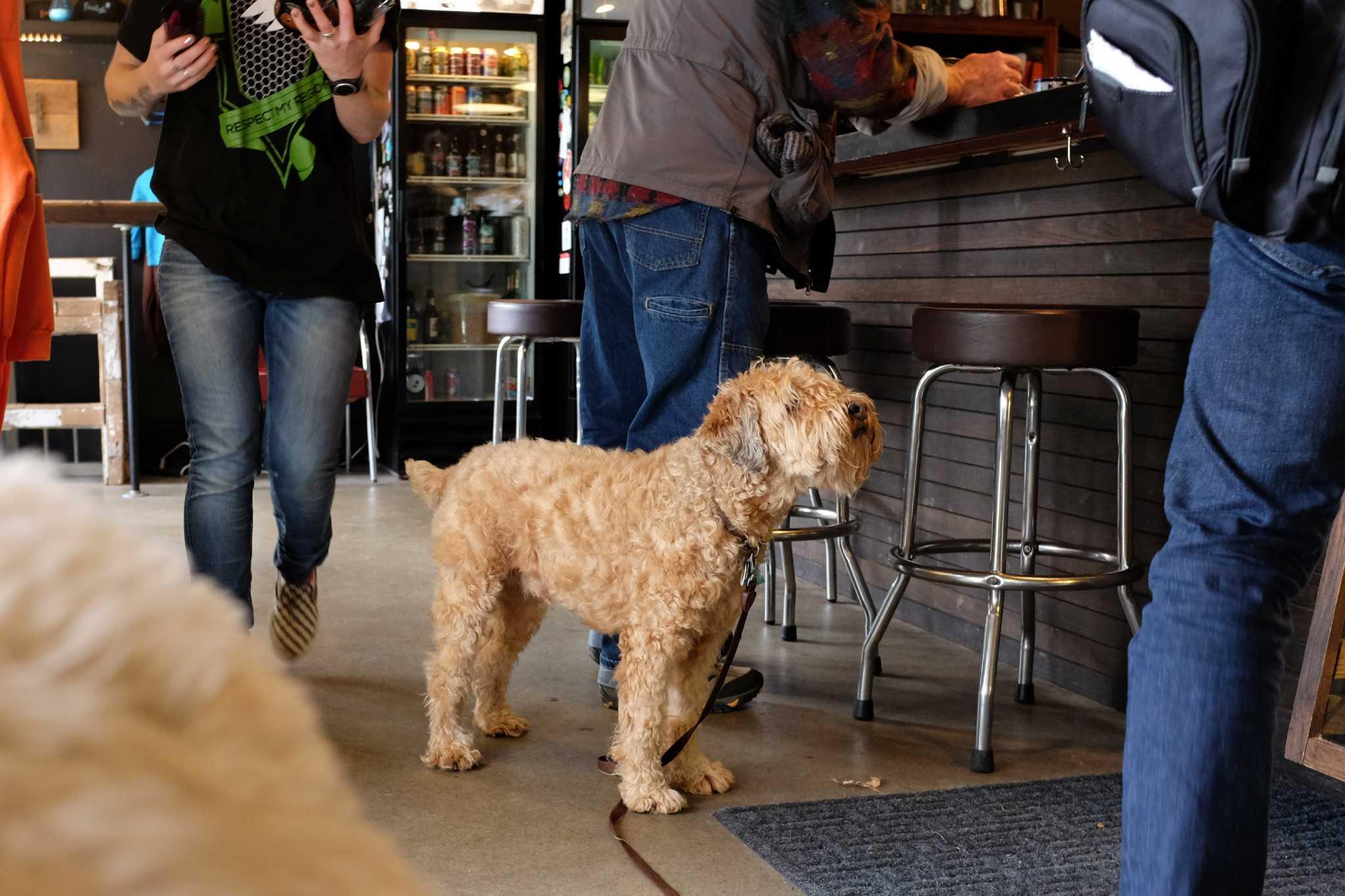 Best Restaurants In Seattle Downtown Yelp
