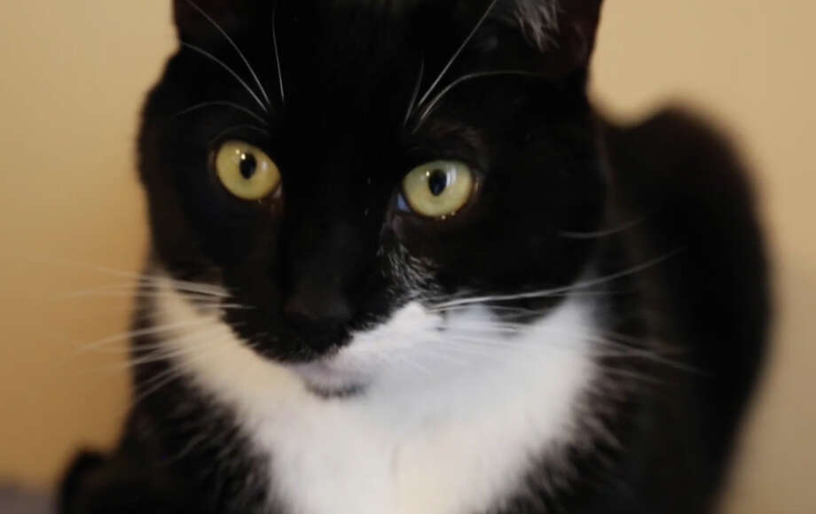 Sadie Dingfelder's cat, Fuzz. Still photo from video.