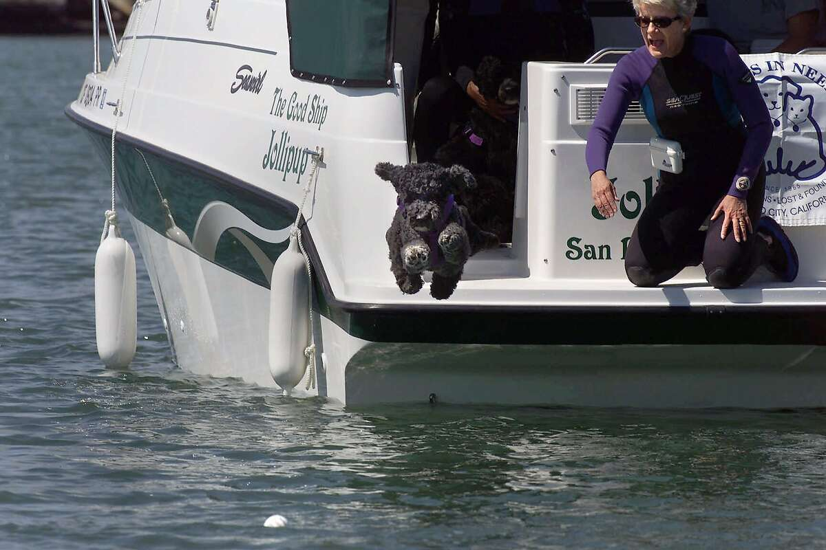The Giants once had a trained squad of dogs who were supposed to retrieve splash hits from McCovey Cove. BARK (the Baseball Aquatic Retrieval Korps) was comprised of five Portuguese water dogs who were specially trained to swim the waters of the cove in search of home run balls. Sadly, the cove was so crowded with other watercraft that it was too dangerous for the doggies. The program was discontinued.