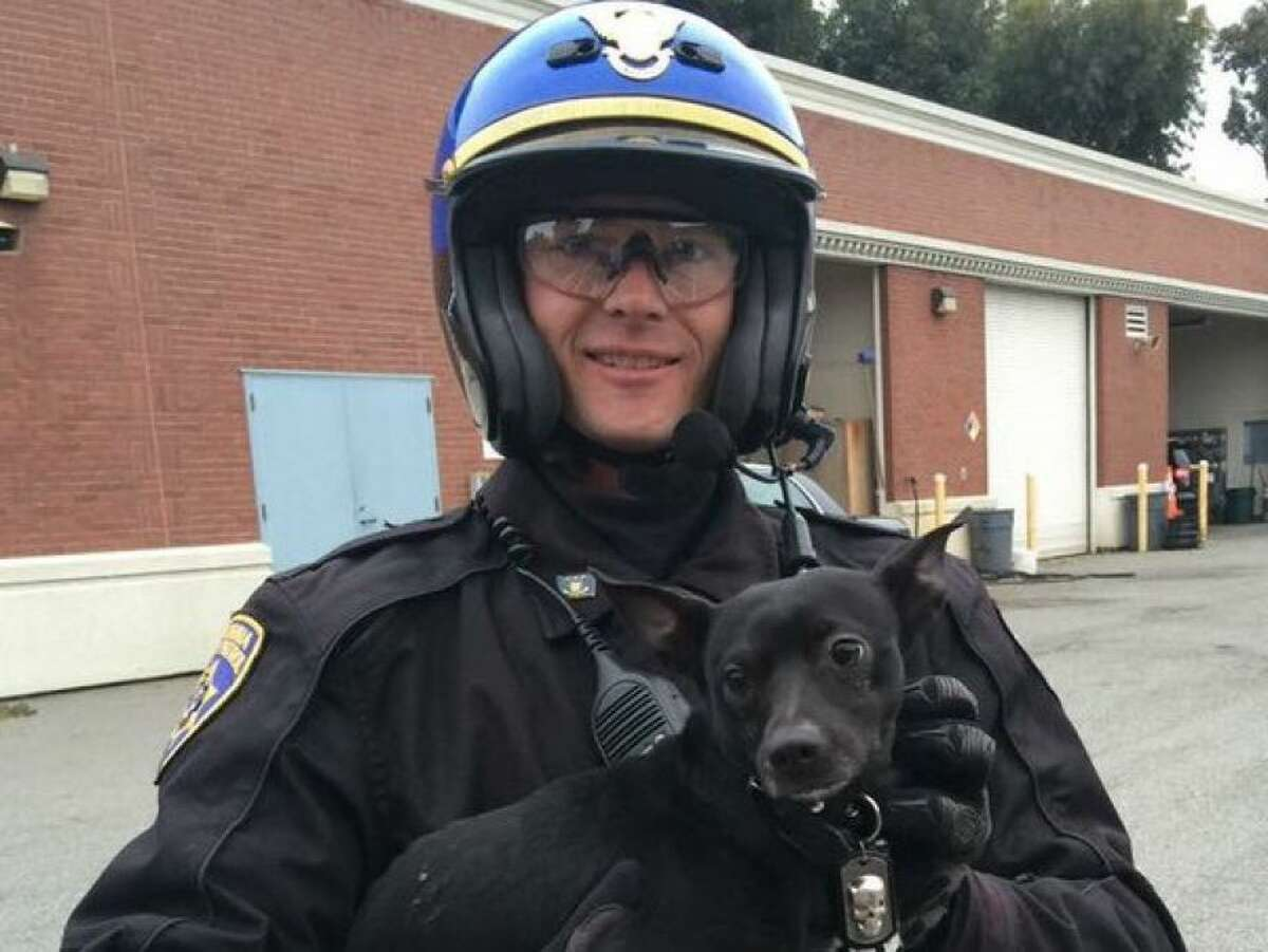 California Highway Patrol officials are working to reunite a small black chihuahua-mix with its owners after officers chased the animal on the Bay Bridge on Sunday morning. In the meantime, he is staying at a local shelter and was nicknamed Ponch after a character on CHiPs, a popular TV series in the '70s and '80s that followed the lives of two CHP motorcycle officers in Los Angeles.