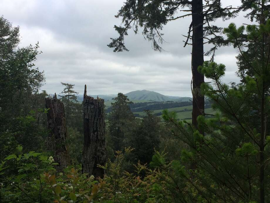 The view from the Olema Valley Trail before you reach the Greenpicker trailhead.
