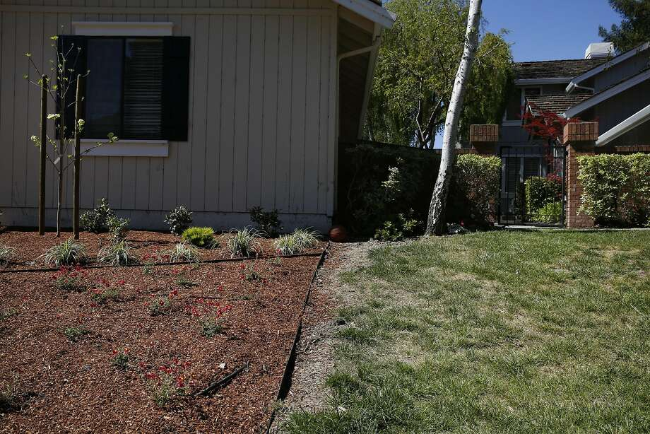 Neighboring lawns feature a drought-resistant landscaping model as well as a traditional grass lawn in Blackhawk. Photo: Leah Millis, The Chronicle
