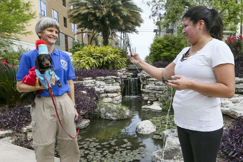 Patty Cohchas (right) stops while jogging alonngside the San Antonio River, to take a photo of King Anbarkio IX, aka Luka, and her handler/owner, Charlotte Wenger, on Wednesday, April 6, 2016. Luka, a five-year-old dachshund and a therapy dog for Therapy Animals of San Antonio, is the top dog of the 2016 Fiesta Pooch Parade.  MARVIN PFEIFFER/ mpfeiffer@express-news.net Photo: Marvin Pfeiffer, Staff / San Antonio Express-News / Express-News 2016