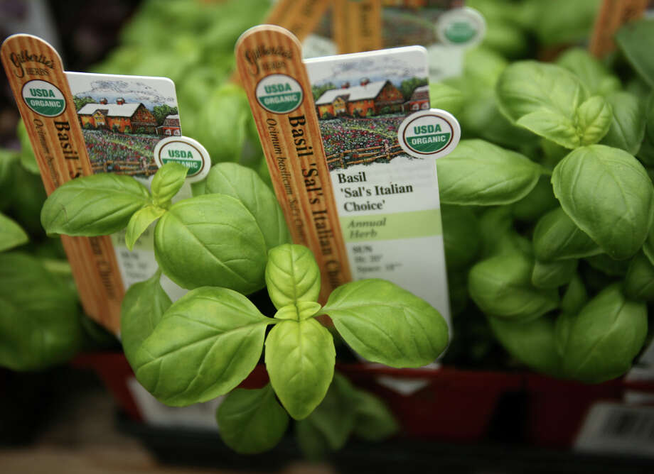 Herbs will be the featured attraction at a number of plant sales and festivals in the coming week. Photo: Brian A. Pounds, Staff Photographer / Connecticut Post