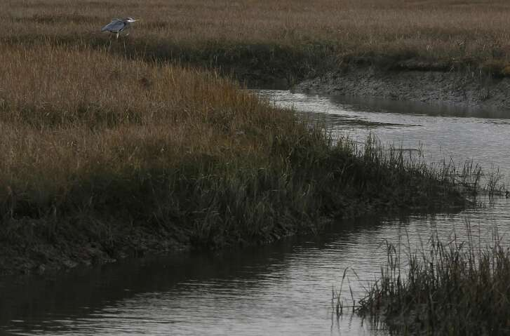 Wetlands that are among those the San Francisco Bay Restoration Authority wants restored near Point Isabel Regional Shoreline Jan. 13, 2015 in Richmond, Calif. A proposed ballot measure in all nine Bay Area counties would pay for major restoration in wetlands and coastal ecosystems of the San Francisco Bay, including the wetlands near Point Isabel Regional Shoreline in Richmond.