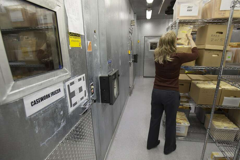 A criminalist with the State of California Department of Justice Bureau of Forensic Services returns a evidence envelope to a secure cold storage freezers at the State DNA Laboratory in Richmond. Photo: Peter DaSilva, Special To The Chronicle