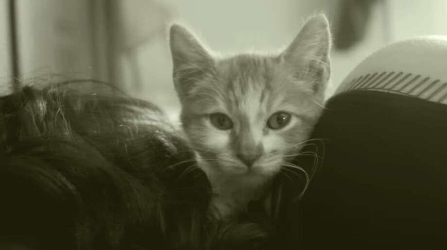 East Bay kittens star in SPCA's adorably dramatic Adele parody video