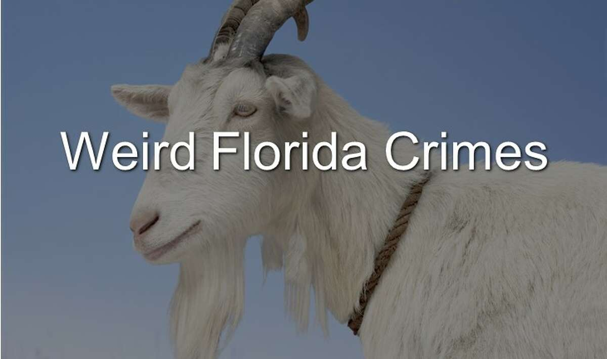 Weird Florida crimes
