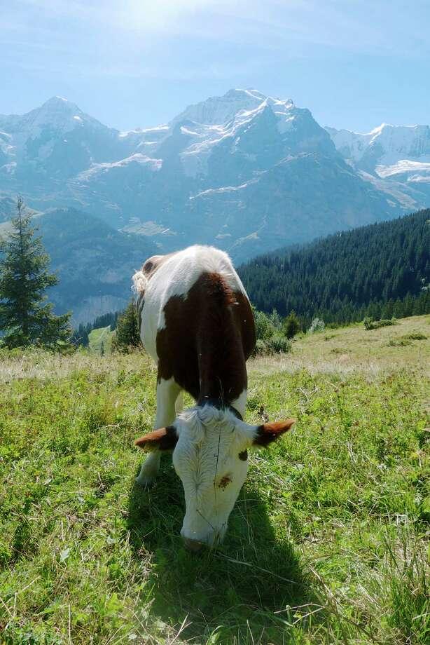 Switzerland's Jungfrau region is one of Europe's most celebrated areas for hiking. Photo: Scott Hubbard / © John Flinn