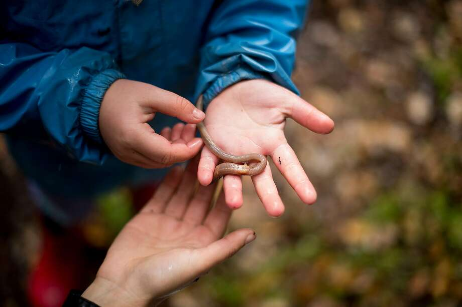 A participant holds a worm collected during BioBlitz at UC Berkeley. Photo: Noah Berger / San Francisco Chronicle