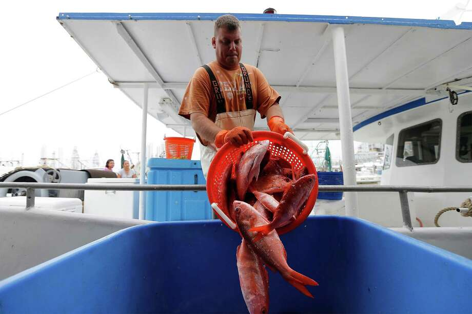 Garrett King, a deckhand on the commercial fishing boat Alice Mae, pours one of many baskets of Vermilion snapper from the ship's storage into a larger bin to have weighed on Thursday, Mar. 31, 2016. The boat was dropping off it's catch at Katie's Seafood Market located in Galveston, Texas. Commercial fishing boats like the Alice Mae and its operators are facing challenging times since the National Oceanic and Atmospheric Administration (NOAA), for the first time, issued regulations allowing industrial aquaculture in the ocean and especially in the Gulf of Mexico. Fish farming has been controversial and under study for years. Fish farms can have huge floating net cages beyond 3 miles offshore. Recently, a suit was filed in U.S. District Court in Eastern Louisiana to stop it. Two are fishing organizations in Texas, in the Galveston area. Worries are several: One is the economic impact of big outfits taking up to 64 million pounds of fish annually out of the Gulf. Another has to do with the environmental impacts of farming the ocean, including the various chemicals used to protect the fingerlings. There's also concern about escaped fish and genetic impacts; plaintiffs say there have been thousands of escapes from shore-side pens. On the other hand, factory trawlers are fast depleting the ocean. (Kin Man Hui/San Antonio Express-News) Photo: Kin Man Hui, Staff / San Antonio Express-News / ©2016 San Antonio Express-News