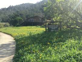 Wildflowers at Rancho del Oso in Santa Cruz County.