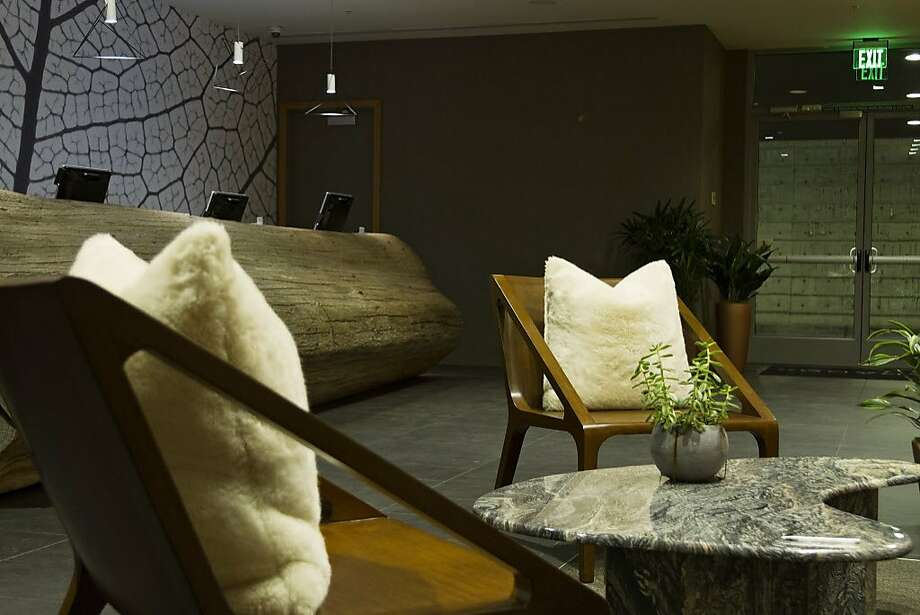 """The Hotel Paradox is impeccably stylish, with a self-described """"urban forest aesthetic."""" Photo: Hotel Paradox"""