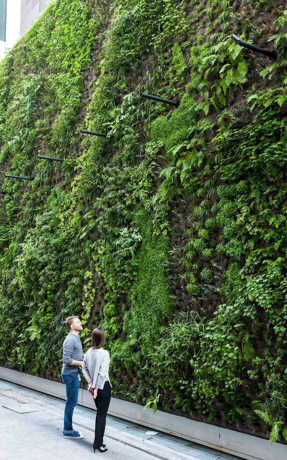 SFMOMA officials are calling it the largest living wall in the Bay Area.  Photo: Henrik Kam, SFMOMA / ©Henrik Kam 2016