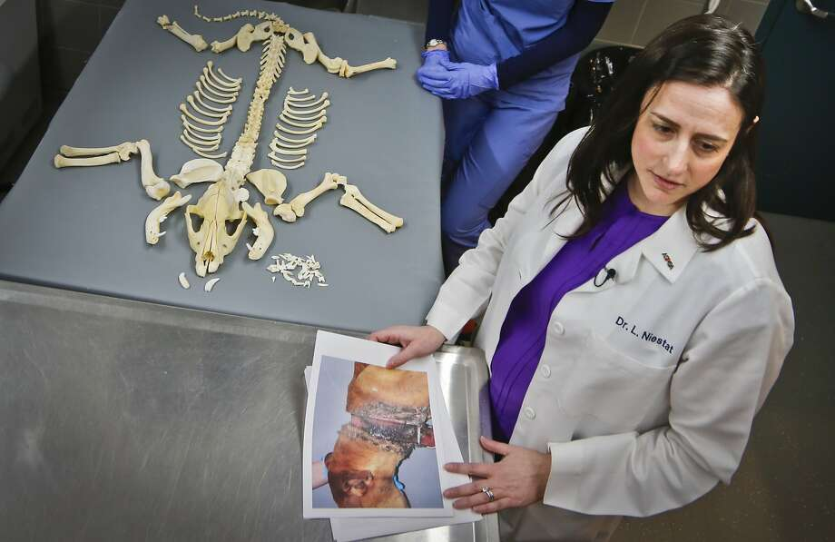 Dr. Laura Niestat, an SPCA forensic veterinarian, holds photo evidence of a dog missing layers of skin from a tight collar. Photo: Bebeto Matthews, AP