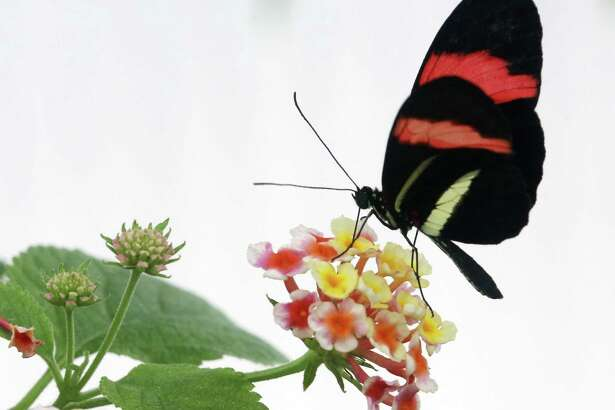 A free workshop on attracting butterflies to pollinate your garden is scheduled Saturday at Enchanted Forest and Enchanted Gardens nurseries in Richmond.