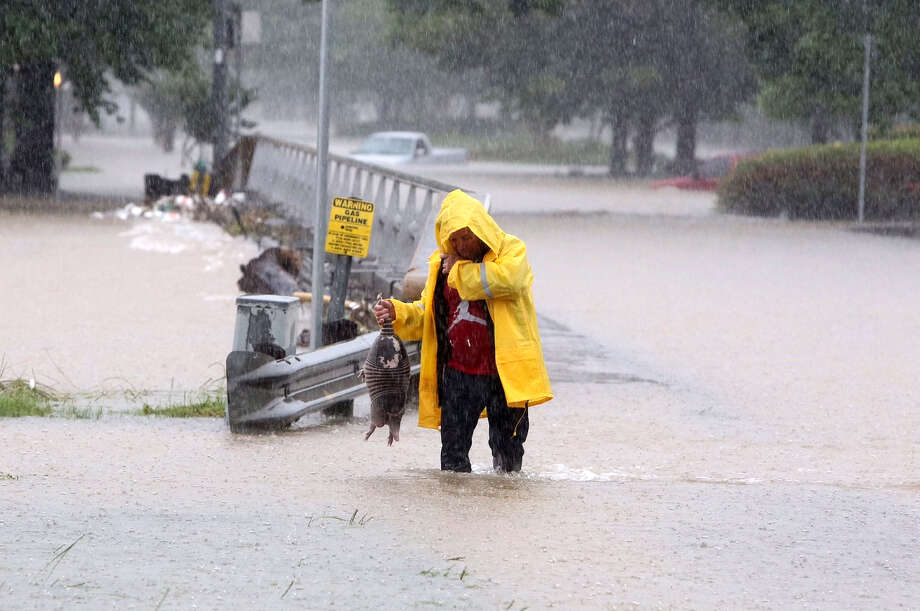 As Greens Bayou crested its banks Monday, a man rescued an armadillo. Photo: Steve Gonzales, Houston Chronicle